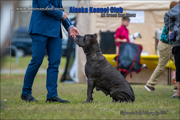 June 2019, AKC All Breed Dog Show