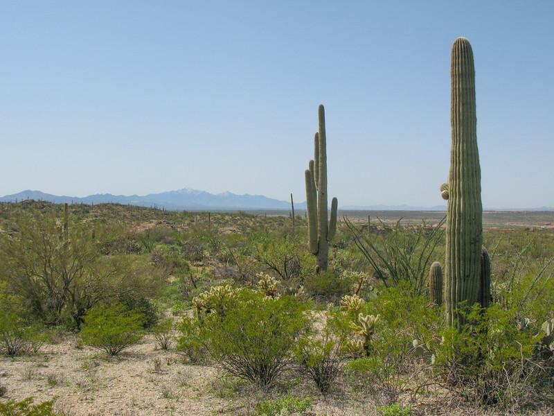 Saguaro NP_20100325_26.jpg
