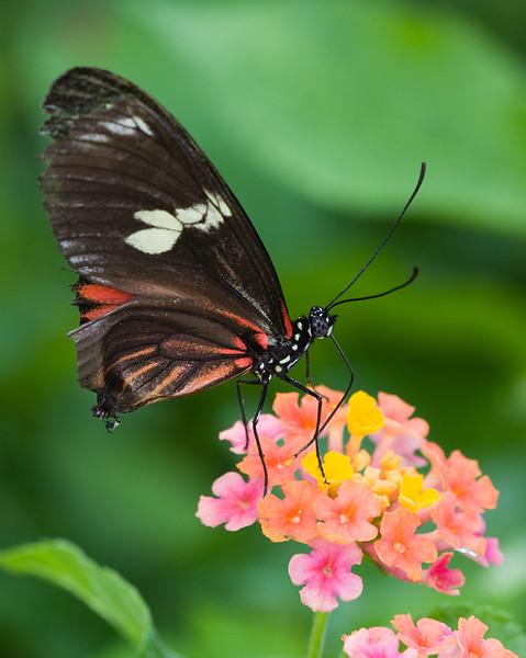 butterfly-4_3800786525_o.jpg