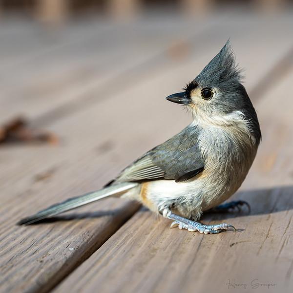 Birds Feeding-104.jpg