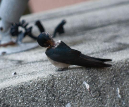 Birds in Funny Poses