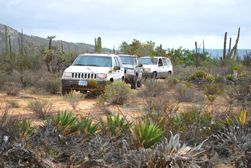 DSC_0004 cherokees in desert garden.jpg