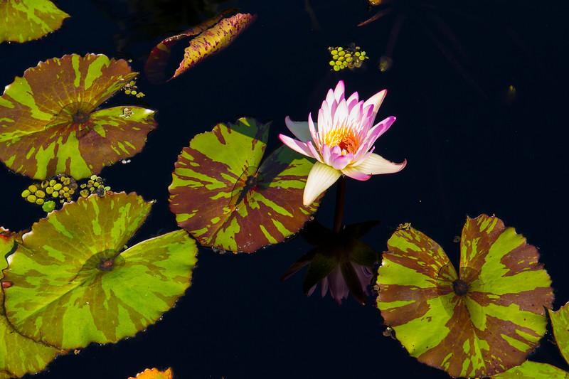 naples_botanical_garden_0028-LR.jpg