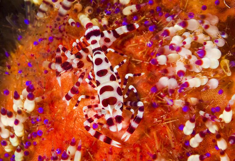 shrimp coleman happy couple.jpg
