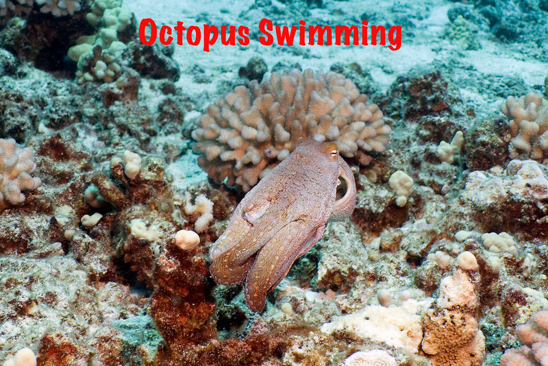 Octopus Leaving.jpg