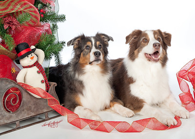 Riverdog Holiday Photos 2011