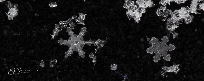 snowflakes-0449.jpg