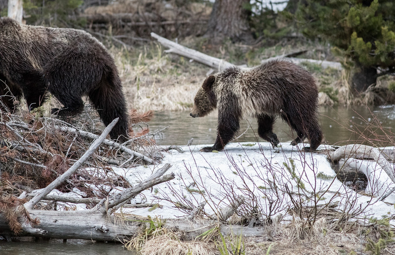Yellowstone Photography ~ -1181.jpg