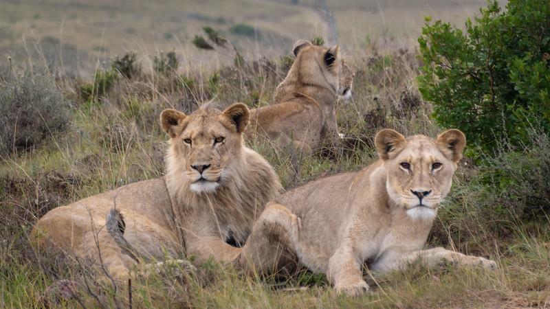 2019-02-04-Zuid-Afrika-2312.jpg