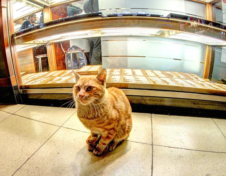 Cat in the Grand Bazaar, Istanbul