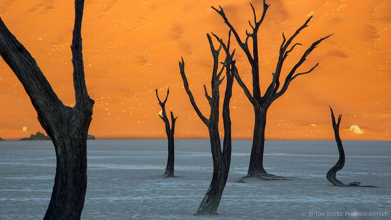Deadvlei - a smooth white salt pan nestled between huge orange sand dunes in Namib-Naukluft National Park in Namibia. The preserved skeletons of 900-year-old camelthorn trees provide the sculptural points of interest.