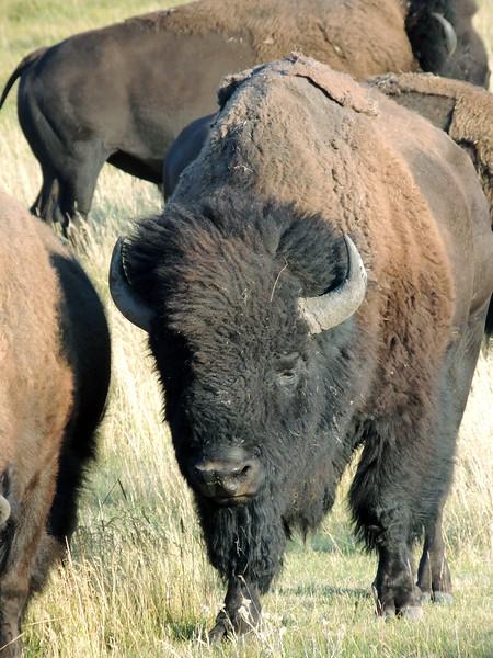 Yellowstone (12).jpg