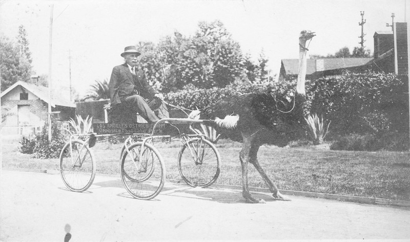 Ostrich Carriage