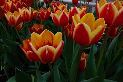 Spring Flower Show_March 15, 2019