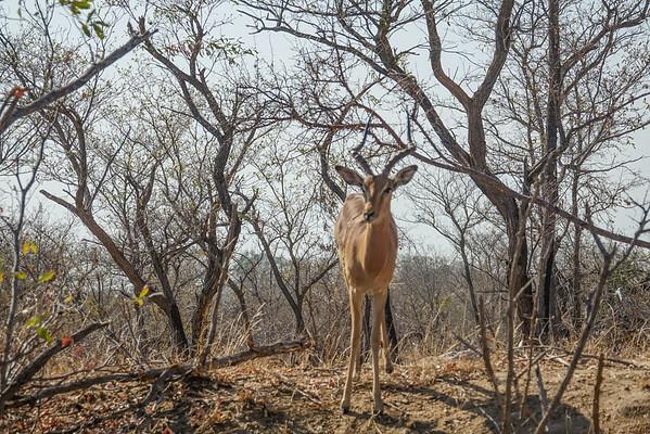 Day 5, Kruger National Park