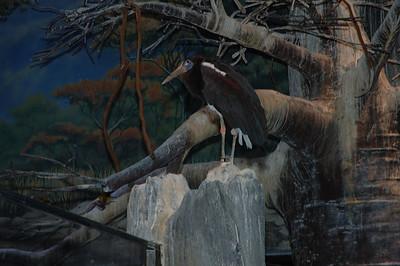 04-13-07 Camden Aquarium