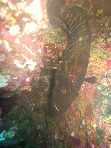 Diving in the Galapagos (377 of 392)