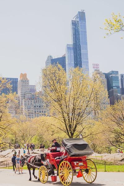 Lynn & David - Central Park Elopement Preview-5.jpg