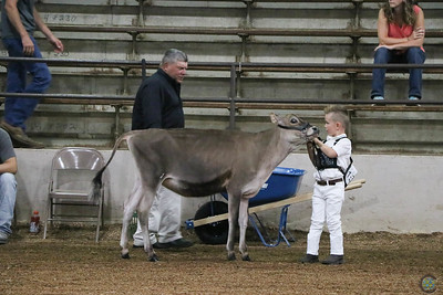 Ohio State Fair Jersey Show 2018