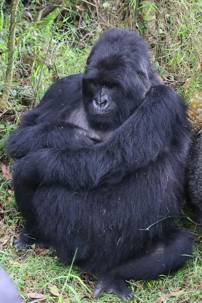 Gorilla0030.JPG