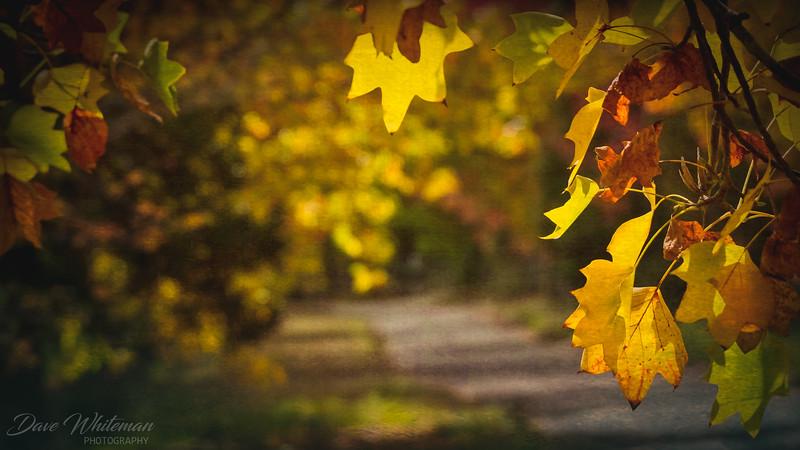 First Flush of Autumn