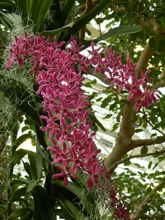 Missouri Botanical Garden/Orchid Show, 2-18