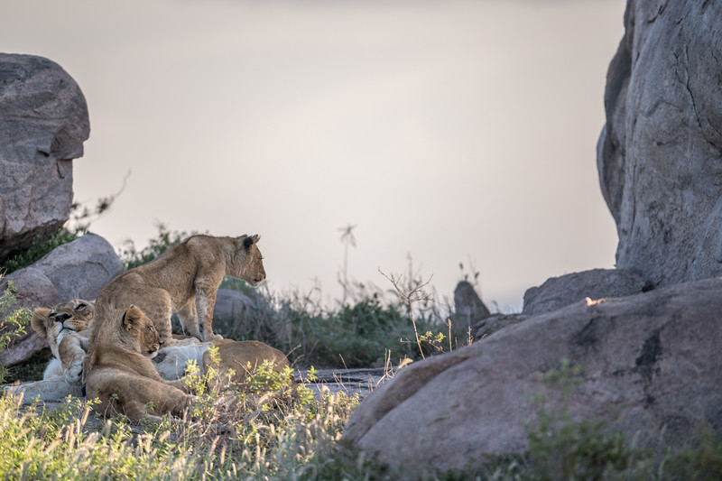 Tanzania_Feb_2018-566.jpg