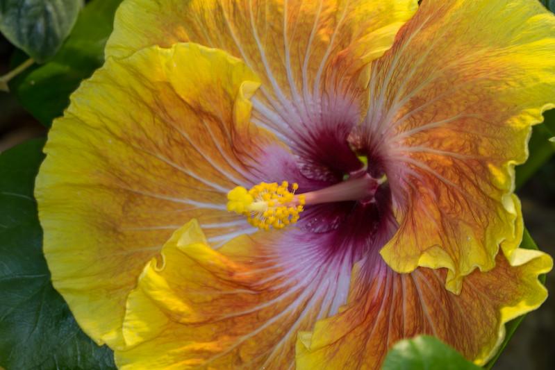 Botanical Gardens 3-6-2017a.jpg