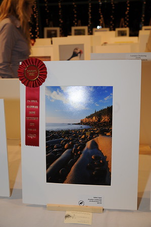 3-8-3009 Meadowlark Photo Contest