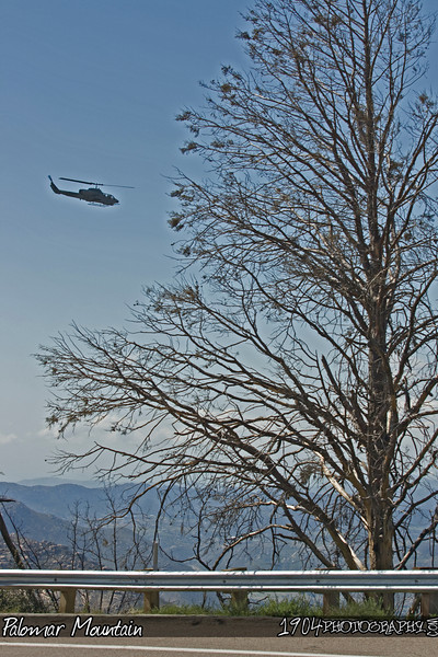 20090307 Palomar Mountain 079.jpg