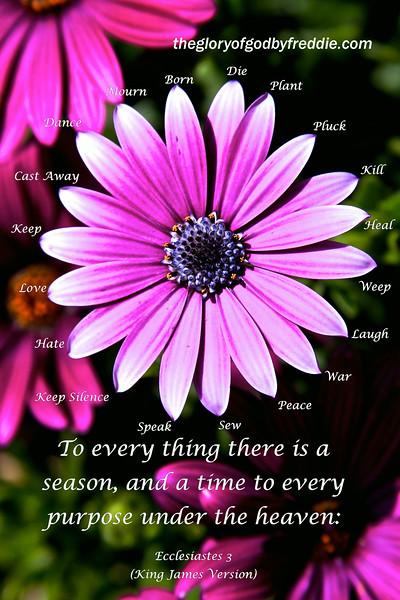 Ecclesiastes 3a 1-8 free .jpg