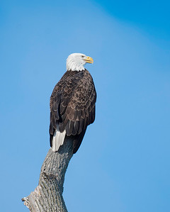 Sandusky Bay Eagles