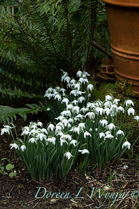 Galanthus & other early spring images