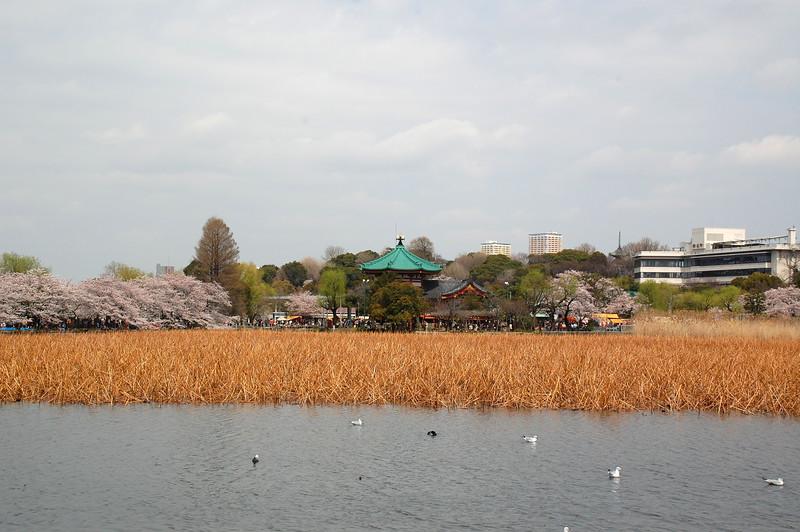 31-Japan10_1038.JPG