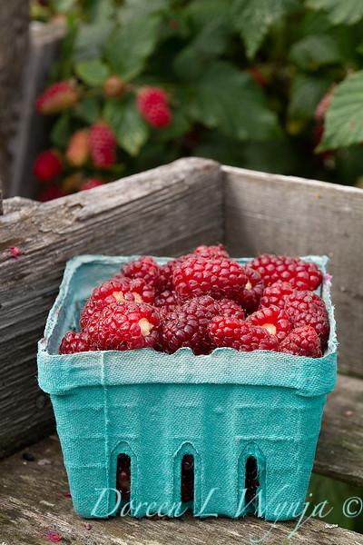 Raspberries picked in blue boxes_5393.jpg
