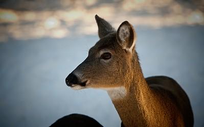 02-21-2020-deer