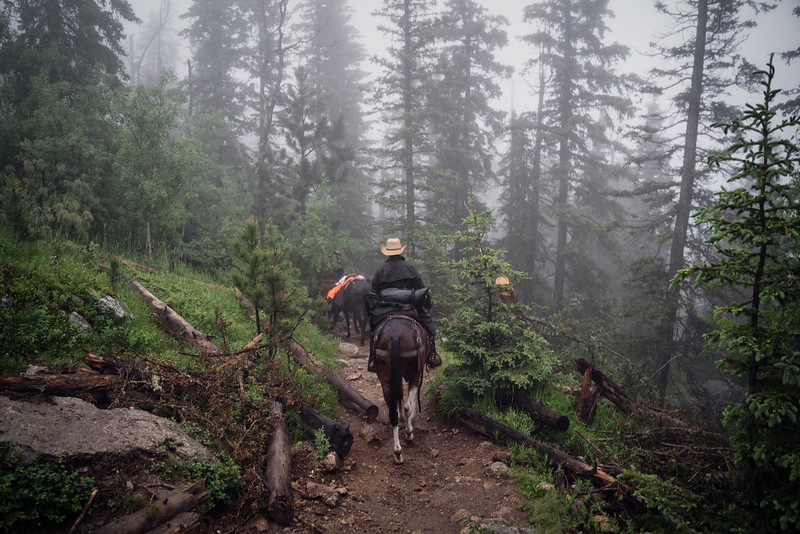 Horses on Black Elk Peak