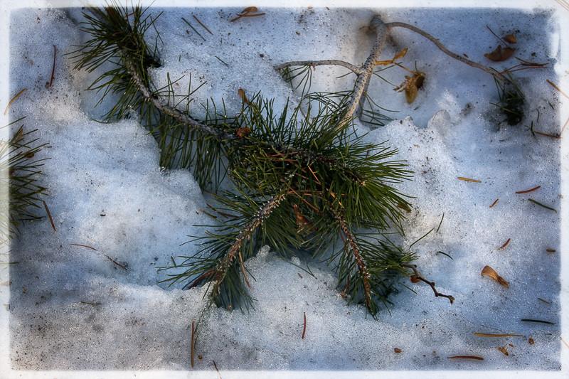 December 26 - Mammoth green.jpg