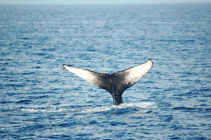 whaletail 14.jpg