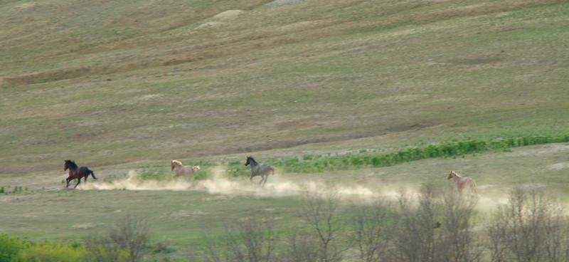 horses1001.jpg