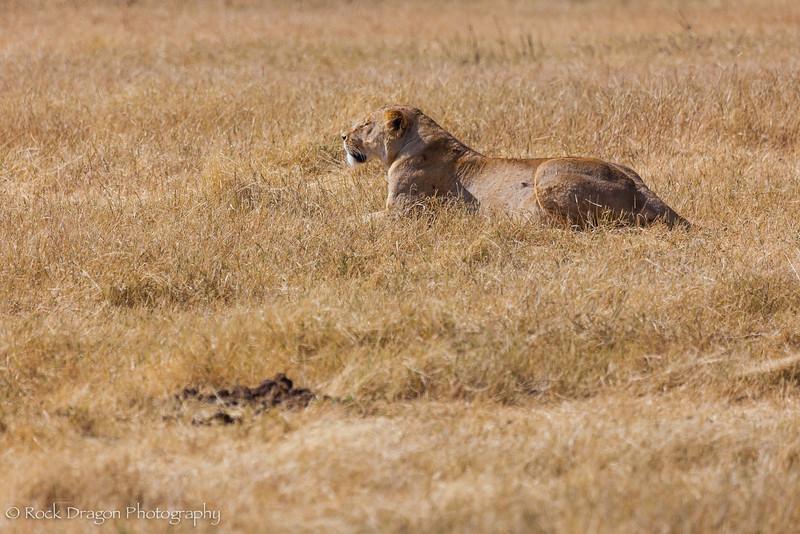 Ngorongoro-24.jpg