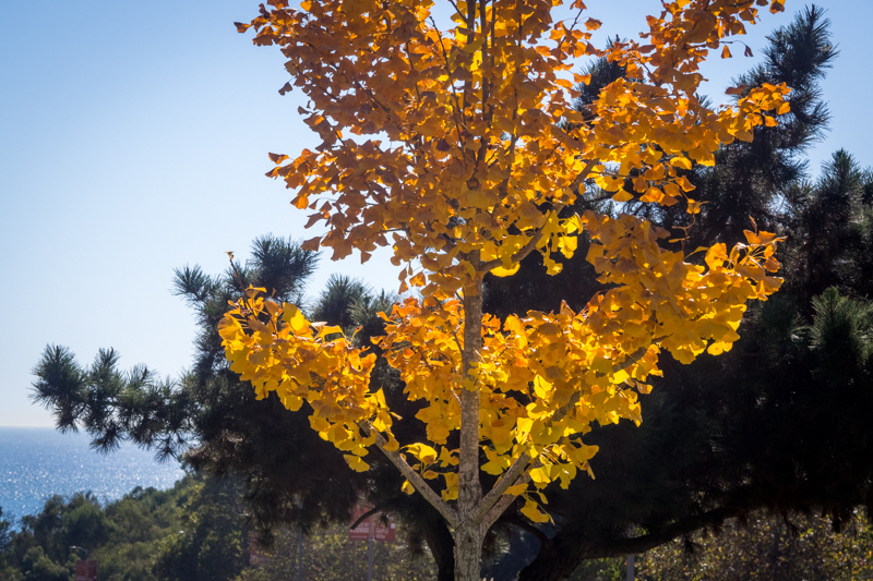 October 22 - Fall foliage in Los Angeles!.jpg