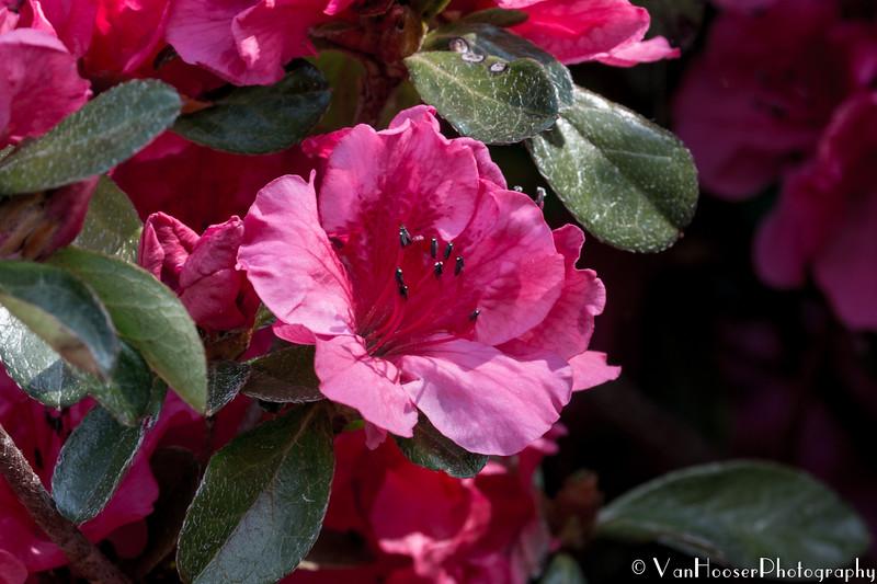 160415_6321_Flowers_14-1.jpg