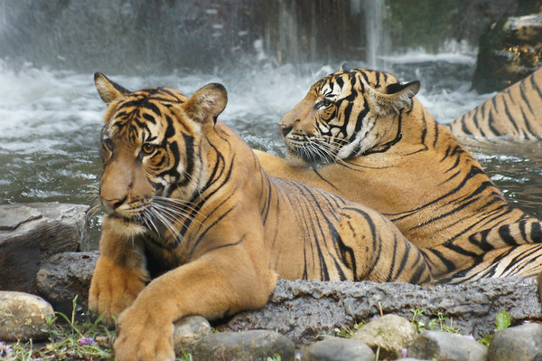 safari nights pb zoo 7-6-12