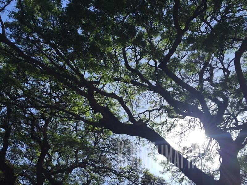 HawaiiPhonePics-397.JPG