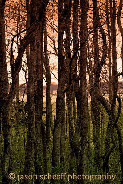 Hammonasset Trees 2009 04 14-5.jpg