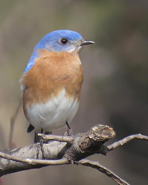 sx50_bluebird_bit_175.jpg