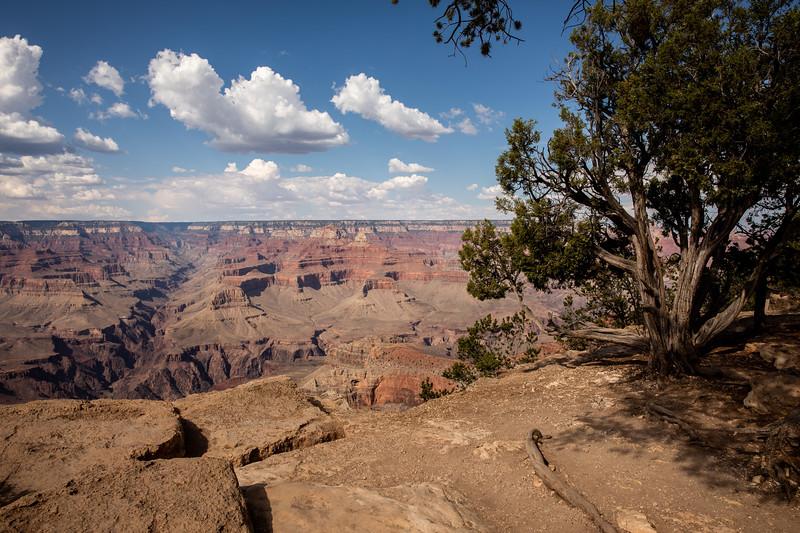 WVWS_Grand Canyon South Rim-5129.jpg