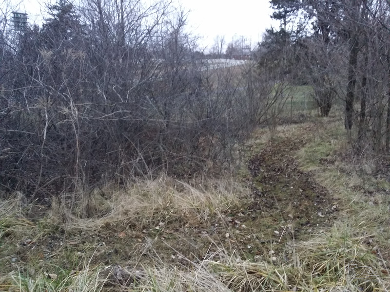 The wild plum thicket is reasonably happy, even though it doesn't produce all that much fruit.  The path going around it is also a water channel when rain runoff is flowing.