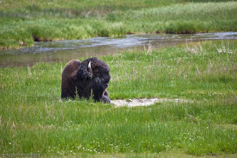 Yellowstone-37.jpg